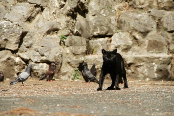 blog voyage australie whv roadtrip italie cat chat neko gato katze