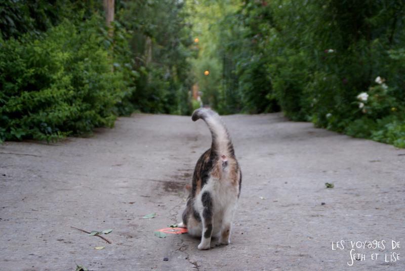 blog voyage pvt canada couple montreal tour du monde rue plateau ruelle chat cat derriere etirement
