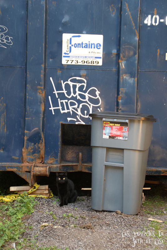 blog canada voyage pvt whv montreal moving day demenagement photo insolite cat cute trash