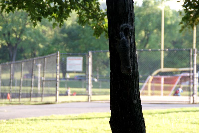 blog canada montreal pvt couple voyage tour monde photo insolite ecureuil arbre ombre chaleur jeanne manse