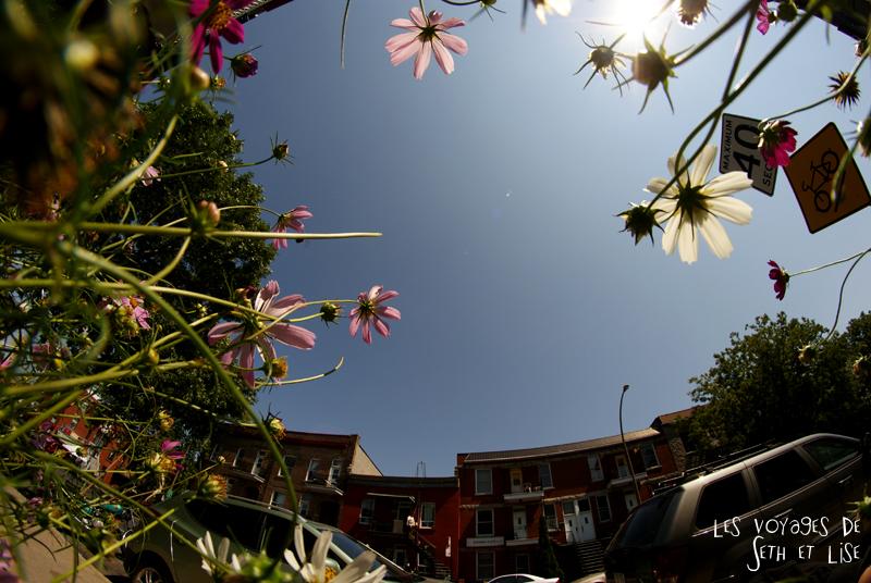 blog pvt canada montreal quebec couple voyage tour du monde fleur fisheye 8mm rue