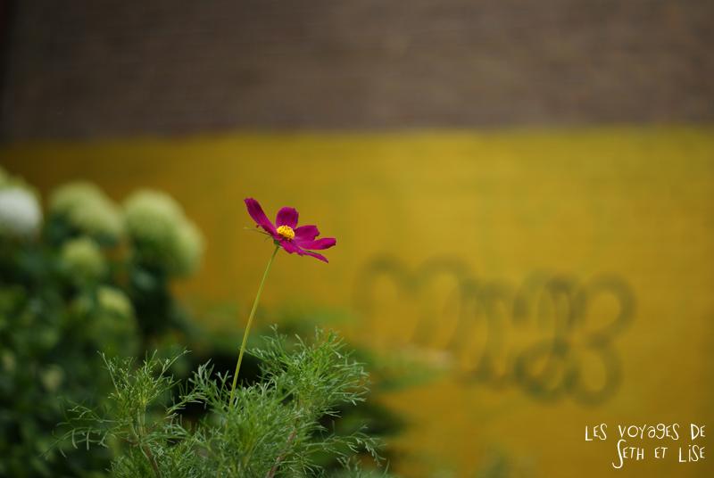 blog pvt canada whv toronto ontartio couple voyage travel tour du monde fleur violette nature