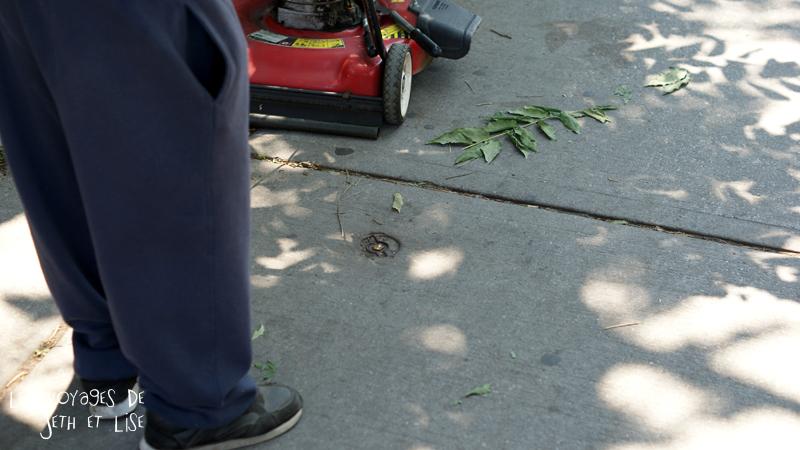 blog pvt canada toronto couple voyage tour du monde travel whv ontario street insolite tondeuse