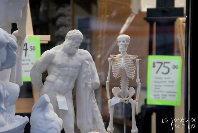 skull squelette os bone
