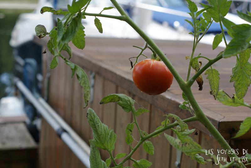 pvt canada toronto couple blog iles island ferry voyage tour du monde tomate sauvage potager rouge legume