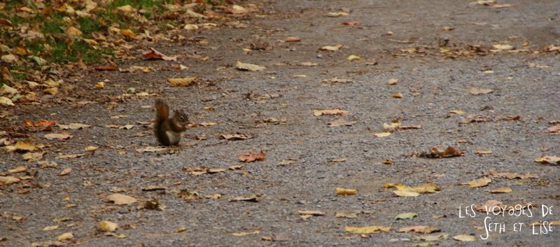 blog photographie canada pvt pvtiste voyage couple tour du monde quebec city ville chutes montmorency ecureuil bebe mignon parc