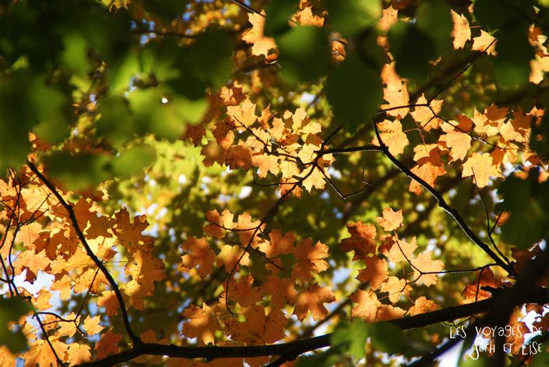 blog pvt canada leaf pvtiste quebec mont orford parc photgraphie voyage couple ete indien summer indian couleur colors nature tour du monde feuille
