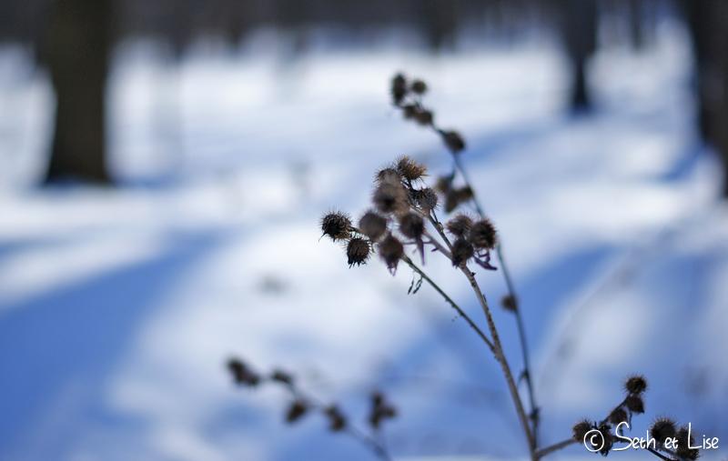 blog pvt canada voyage photographie montreal mont royal hiver neige chardon nature