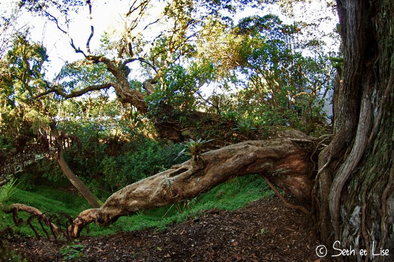 blog whv nouvelle zelande pvt voyage photographie seth lise auckland nord ile arbre
