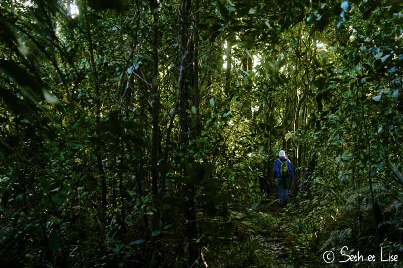 blog whv pvt nouvelle zelande voyage photgraphie seth lise couple tour du monde kauri foret tempete