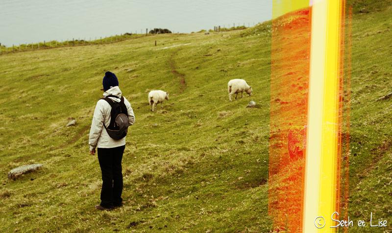 Un volcan plein de moutons : Mauao