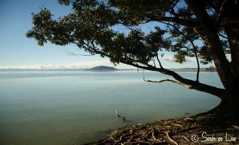 tree_water.jpg
