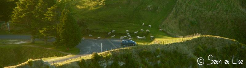 sheepattak.jpg
