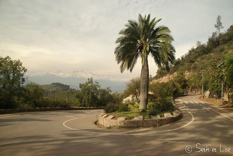 palmier dans un virage sur le san cristobal