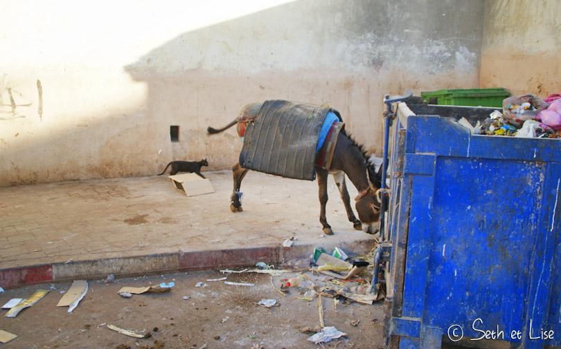 ane maroc fes poubelle