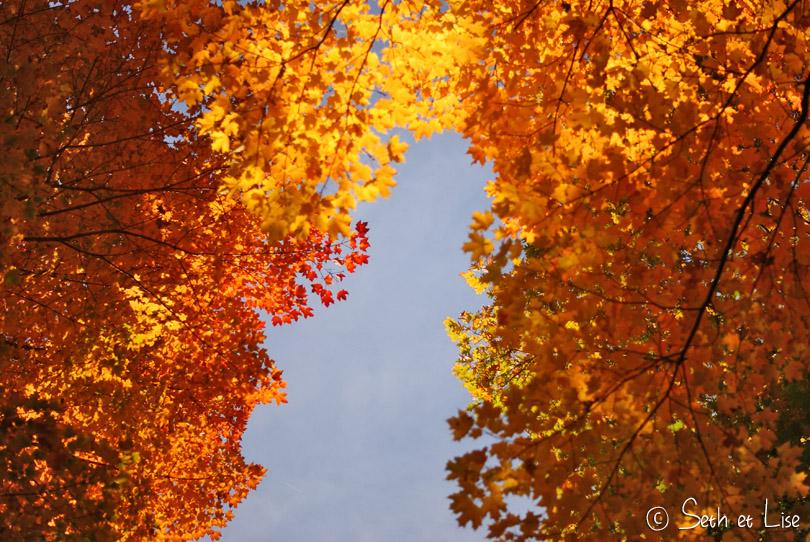 feuilles jaune automne