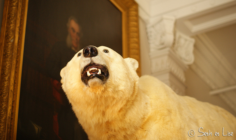 polar bear redpath museum