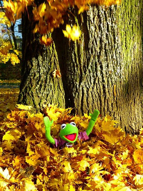 leaves-63301_640