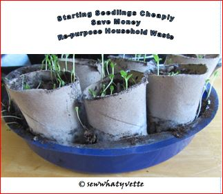 Starting Seedlings on a Budget
