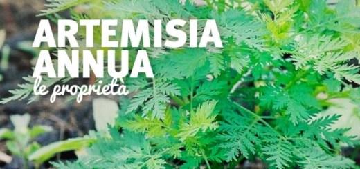 Artemisia-annua-proprieta-640x390.jpg