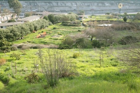 Alemany Farm is a project of the Alemany Resident Management Corp., founded by the residents of the public housing complex that lies alongside it, located next to a major freeway in the city of San Francisco. On this beautiful farm, children from the housing complex learn to grow crops and sell their produce in farmers' markets.