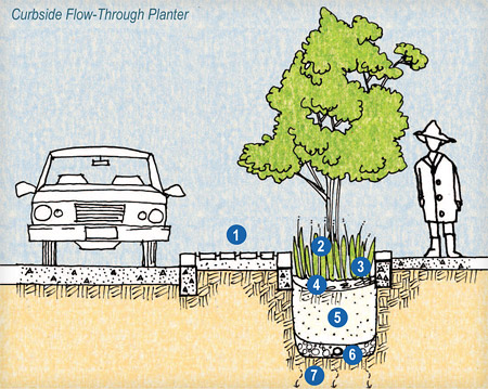 Schematic Drawing of a Rain Garden