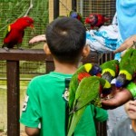 Kids with birds