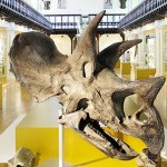 Hunterian Museum - Photo Courtesy: http://www.glasgowsleadingattractions.com