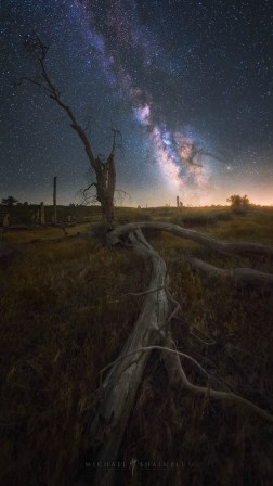 Milky Way Dead Tree