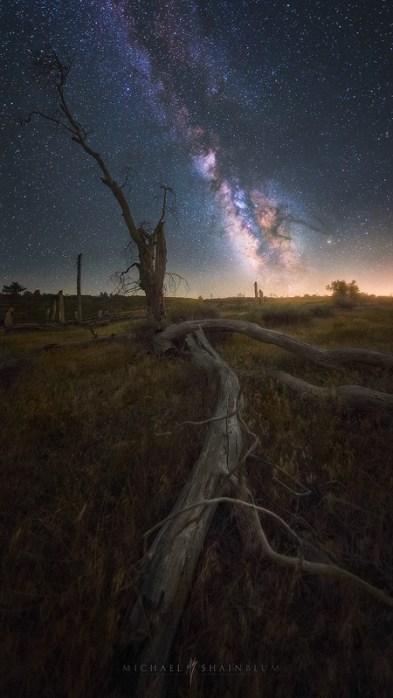 Milky Way Dead Tree