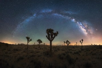 Joshua Tree Milky Way Galaxy Night Sky