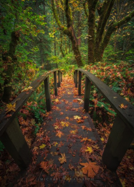 Fall Autumn Oregon Landscape Photo