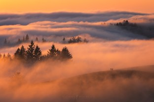 Fog Friends Sunset San Francisco Forest