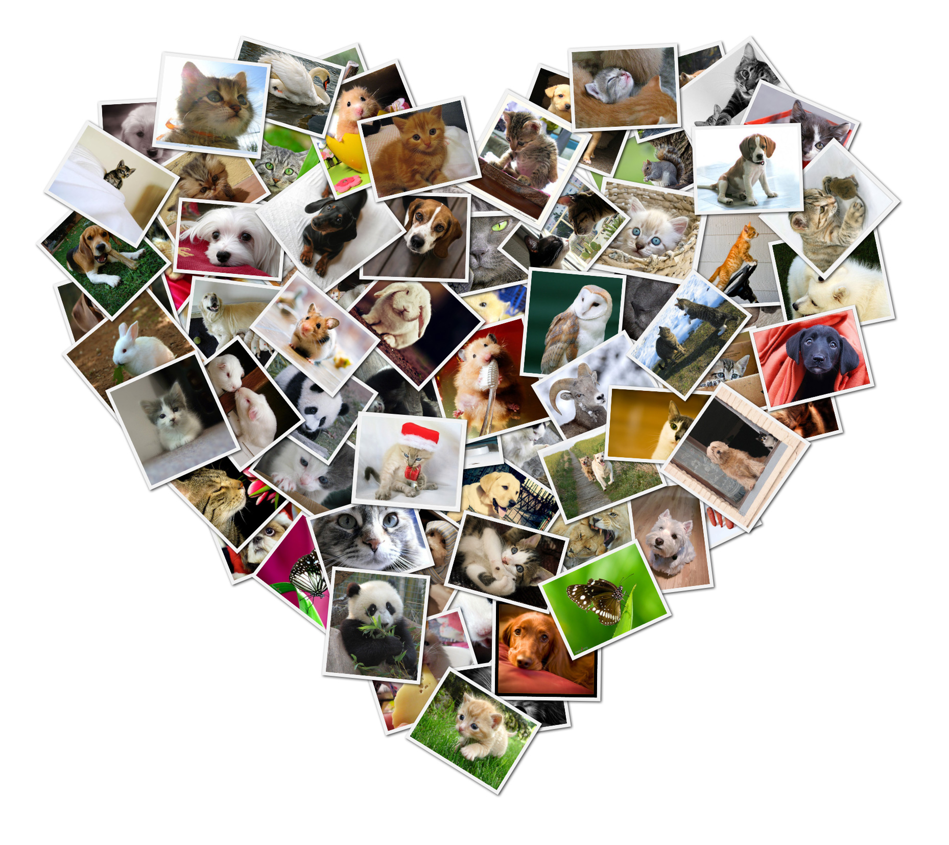 Shape Collage   Automatic Photo Collage Maker Make heart shaped digital photo collages