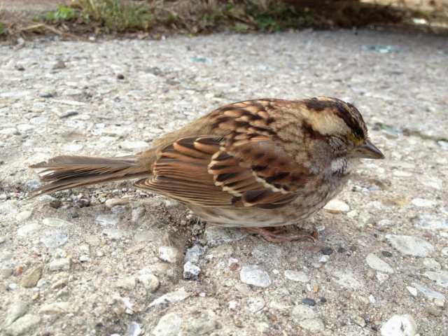 Sparrow bird essay in english