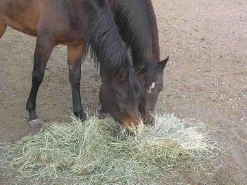 Horses eating hay - Photo by BLW