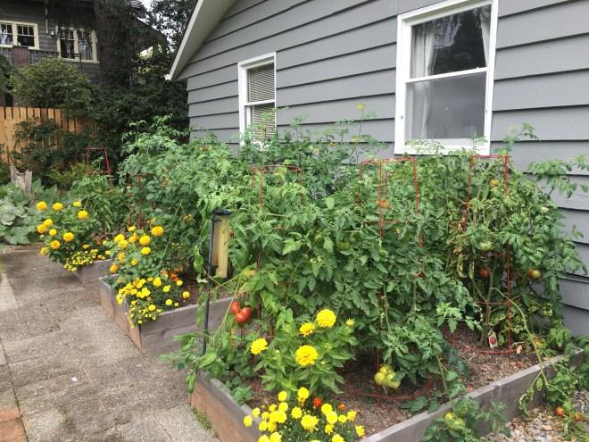 Tomato Garden 2016