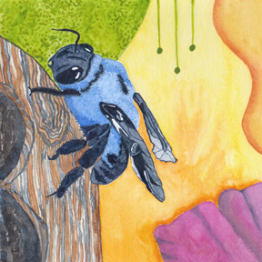 Carpenter Bee, watercolor on 140 lb. cold press paper. © 2013 Sheila Delgado