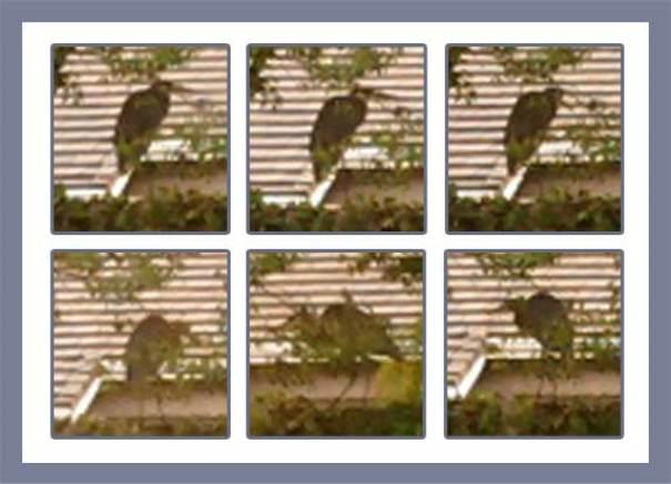 Heron, so. cal. bird sighting