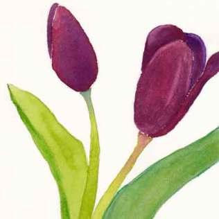 Purple Tulips. 4 x 6 watercolor and gouache on 140 lb. Arches cold pressed paper. © 2015 Sheila Delgado