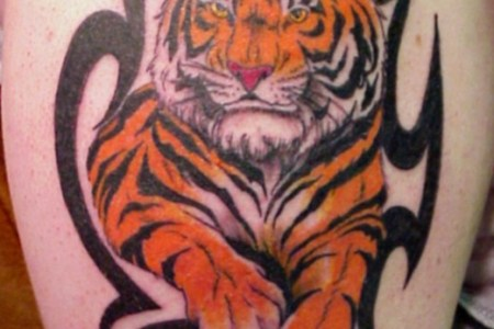 tribal tiger tattoo design for all 520x706
