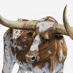 Sherry Steele Artwork - Bona Fide Legend | Longhorn