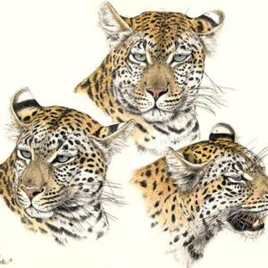Sherry Steele Artwork - Cause for Alarm | Leopards