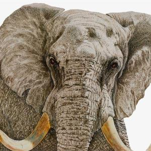 Sherry Steele Artwork - Ultimatum | Elephant