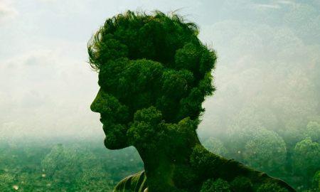 Hoja En Verde