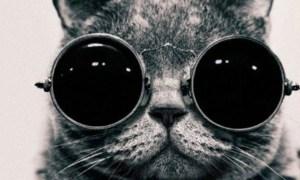 El gatete que puso cara a We Love Cats Market