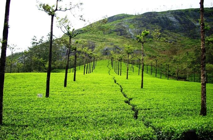 india-tea-prompt