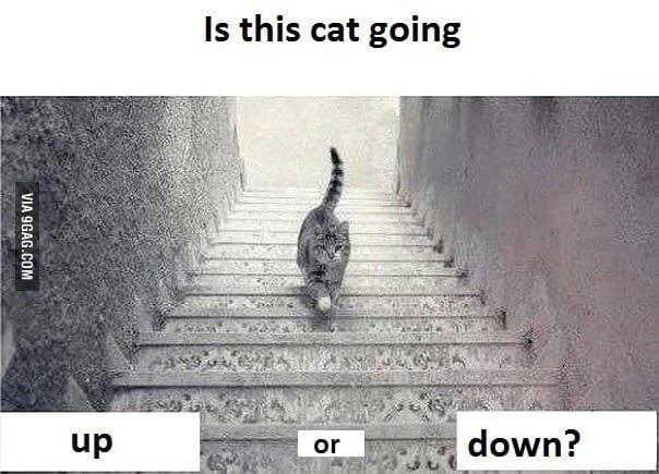 dilema-do-gato