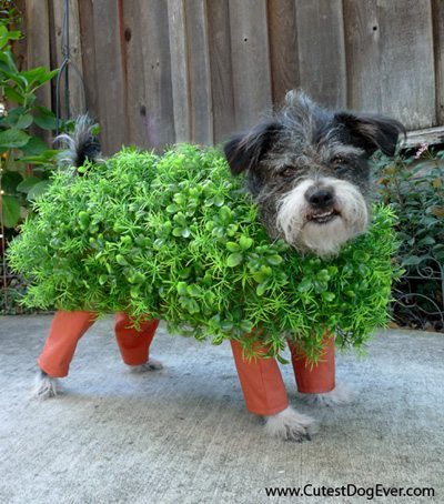 7 DIY Pet Halloween Costumes