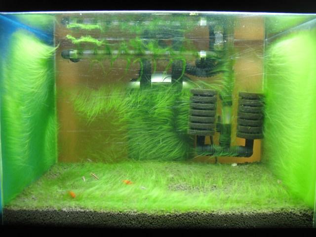 Algae planted tank. Full aquarium